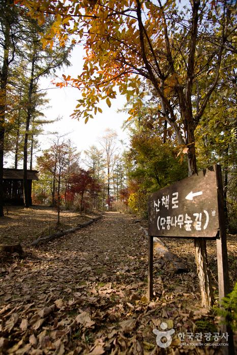 Erholungswald Seomaejae (설매재자연휴양림)
