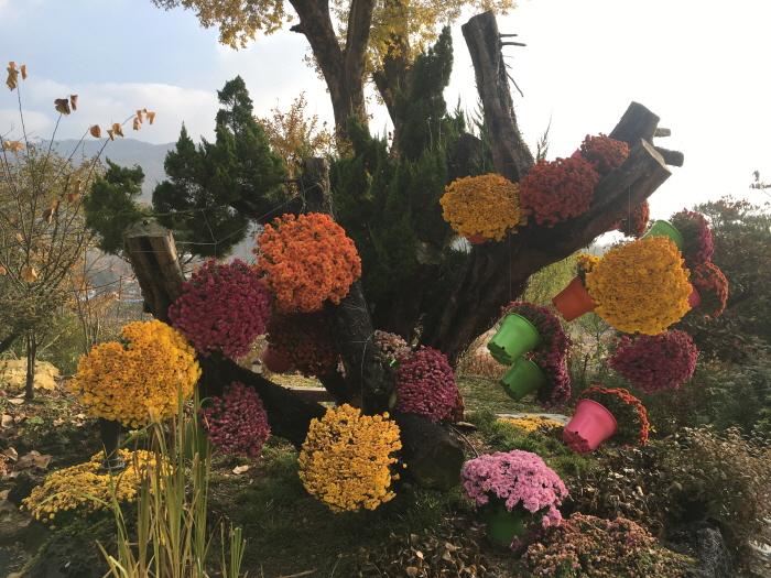 아름다운정원 화수목 사진4