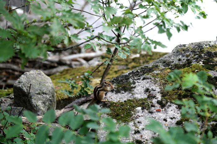 무릉계곡의 다람쥐