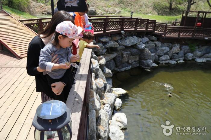 물고기 먹이주기 체험