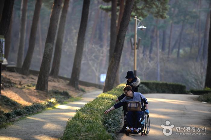 산림전시관으로 향하는 평탄한 길