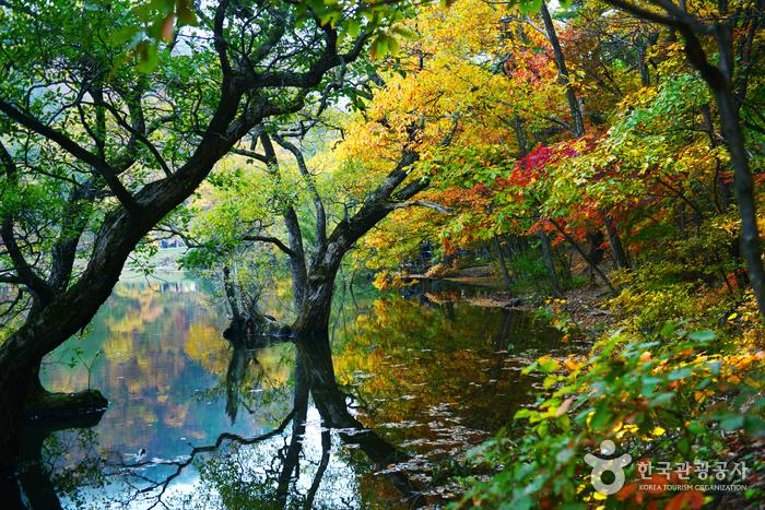 Jusanji Pond (주산지 (청송 국가지질공원))