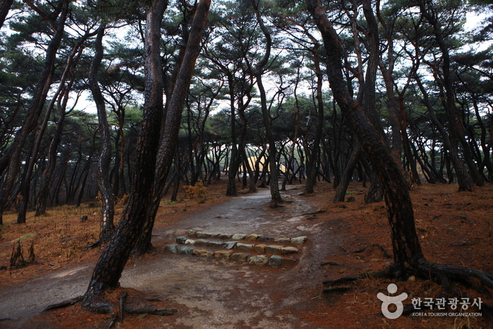 Royal Tomb of Queen Seondeok (경주 선덕여왕릉)