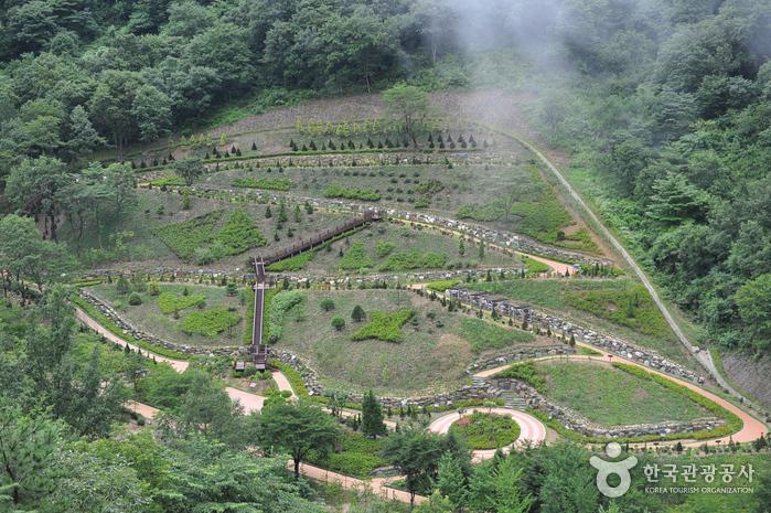 Daea Arboretum (대아수목원)