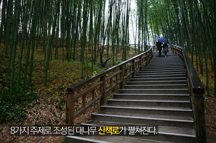 8가지 주제로 조성된 대나무 산책로가 펼쳐진다.