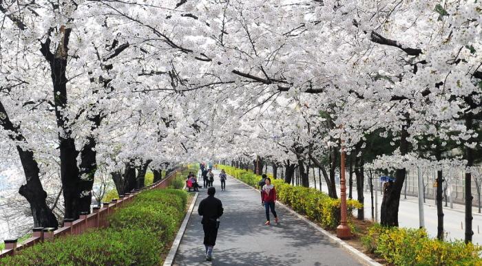 東大門春の花祭り(동대문 봄꽃축제)