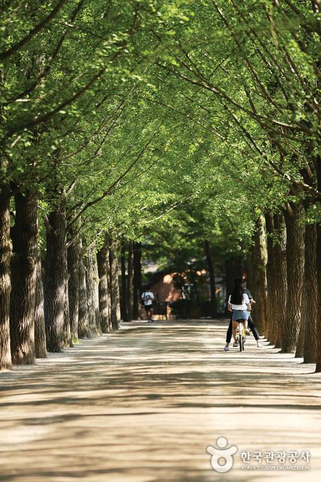 길 양 옆으로 심어져있는 나무사이 길을 한 커플이 자전거를 타고 지나고 있다.