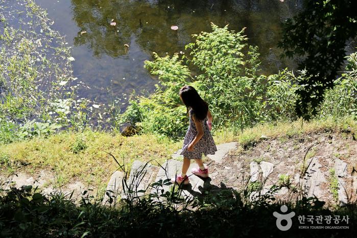 임대정에서 아래 연못으로 이어지는 조붓한 길