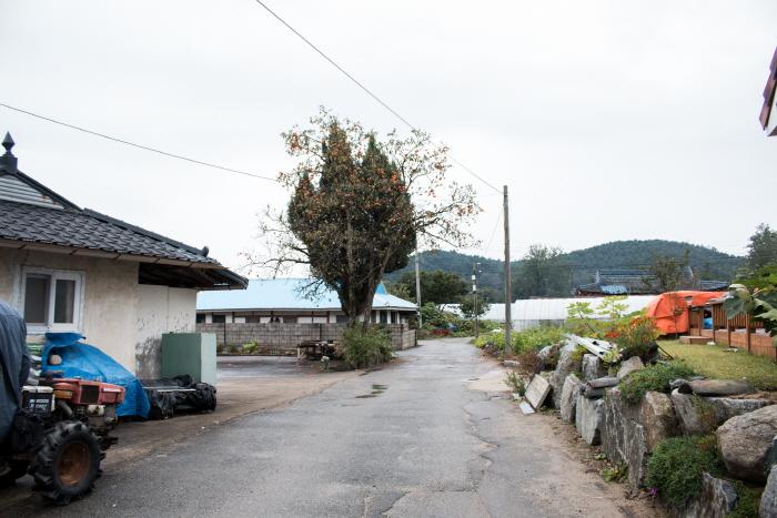 속초 하도문쌈채 마을