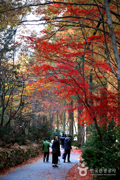 장태산자연휴양림의 가을 풍경