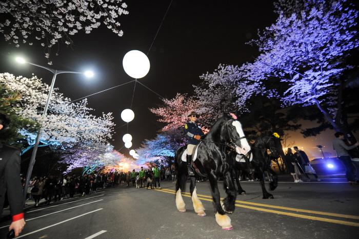 Festival nocturne des cerisiers à LetsRun Park à Séoul 2019 (렛츠런파크 서울 야간벚꽃축제 2019)