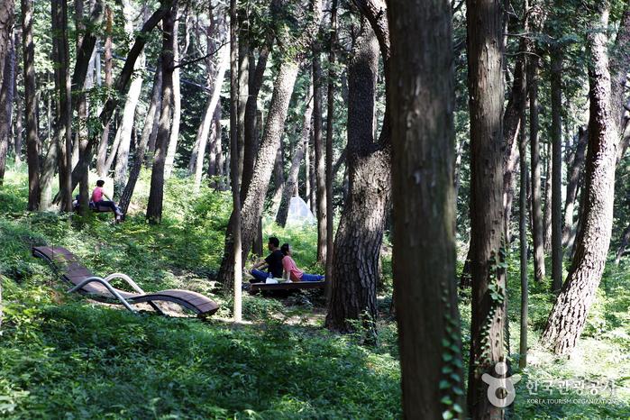 창원 편백 치유의 숲