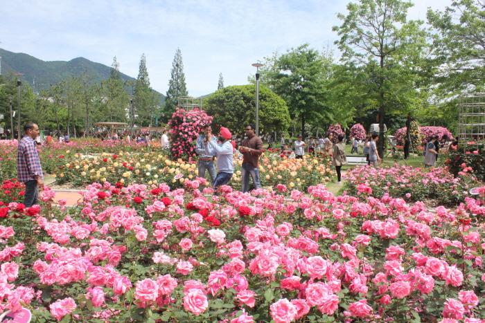 창원 장미공원
