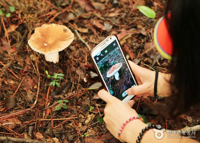 둘레길 곳곳에 자라고 있는 독버섯