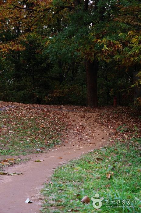 변종인의 묘와 신도비로 가는 길. 단풍과 낙엽길이다.