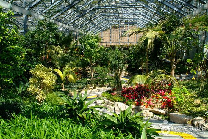 Arboretum Wando (완도수목원)