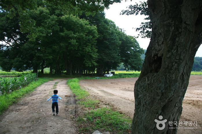 서어나무 숲
