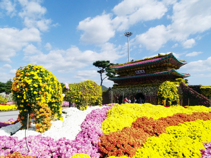 Hampyeong Grand Chrysanthemum Festival (대한민국 국향대전)