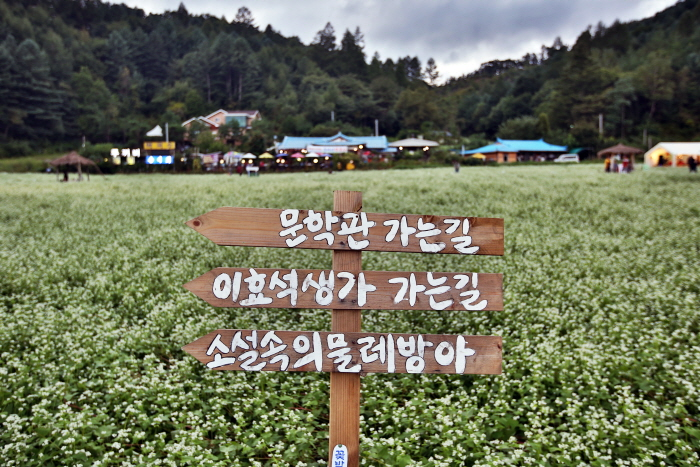 Культурный фестиваль имени писателя Ли Хё Сока в Пхёнчхане (평창효석문화제)3
