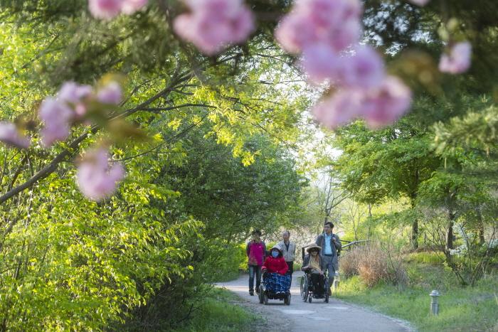 꽃과 신록이 어우러진 공원 탐방로