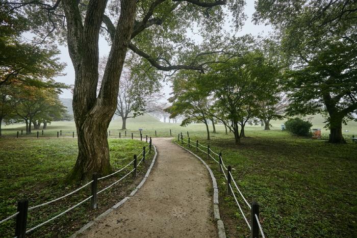 Лес Керим в Кёнчжу (경주 계림)