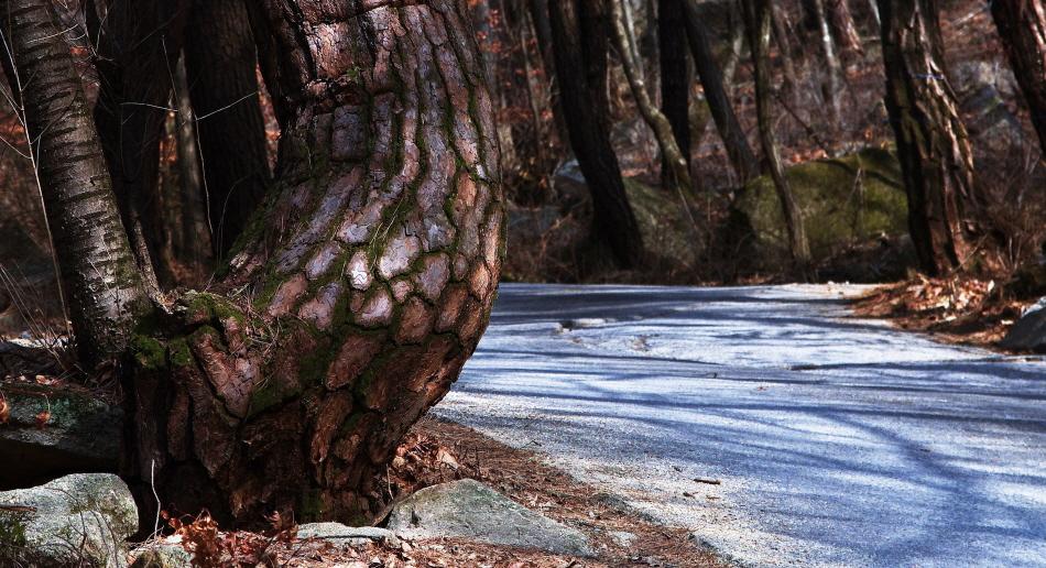 계곡의 너럭바위와 크고 작은 바위들, 바위에 뿌리를 내린 나무들이 어우러져 소소한 풍경을 만들어 낸다