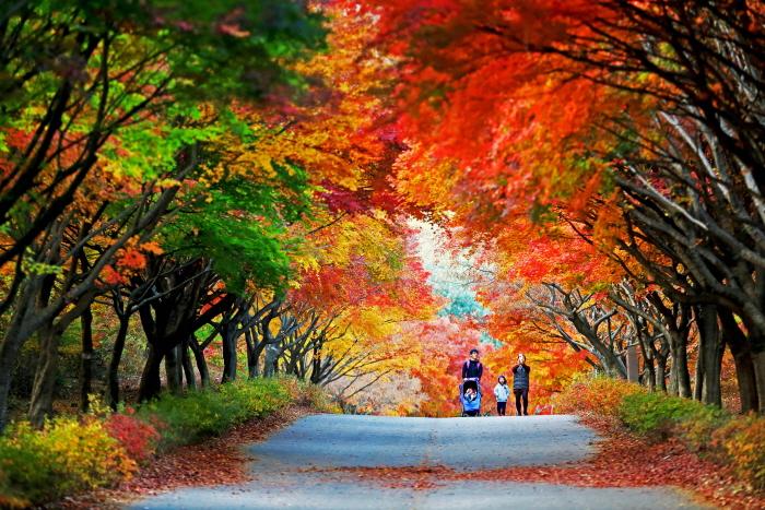 독립기념관 단풍나무숲길 힐링축제 2018