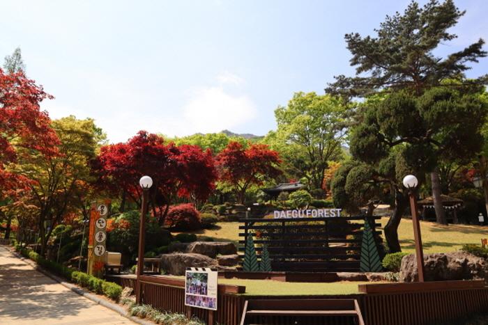 에코테마파크 대구숲