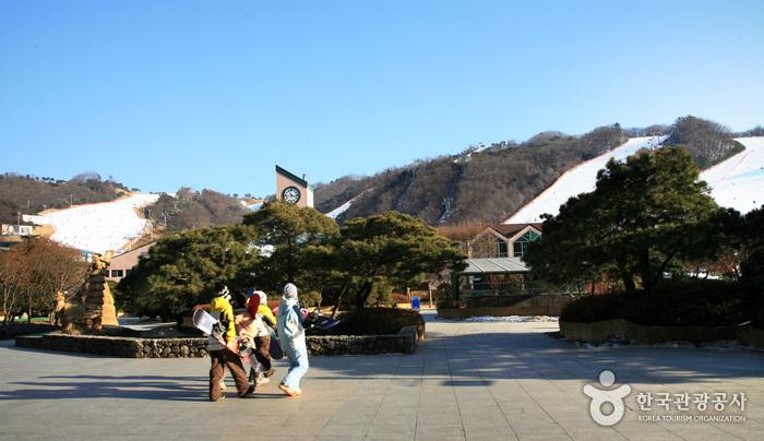 Daemyung Vivaldi Park Ski World (대명 비발디 파크 스키월드)