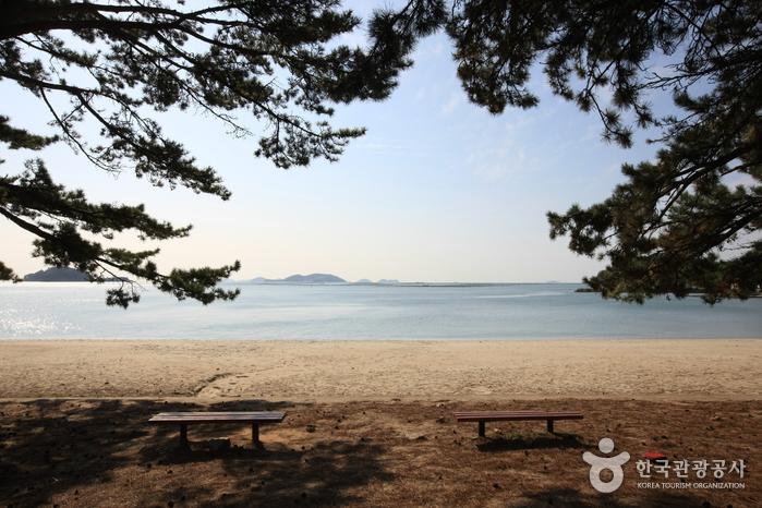 Пляж Сонхо (송호해수욕장)19