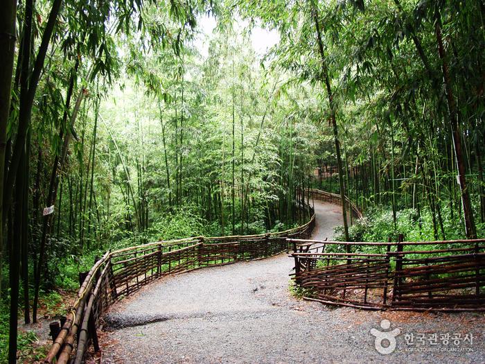 테마 산책길 (여름철엔 모기조심)