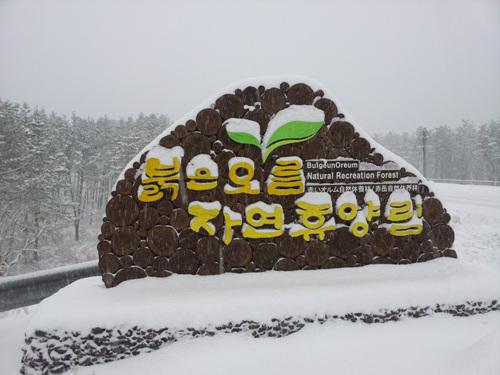 붉은오름자연휴양림 사진6