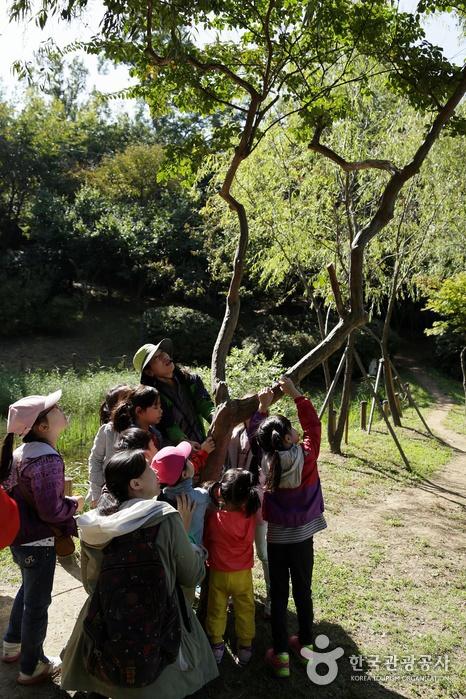 어린이 키만큼 낮게 자란 나무가지를 만져보는 아이들