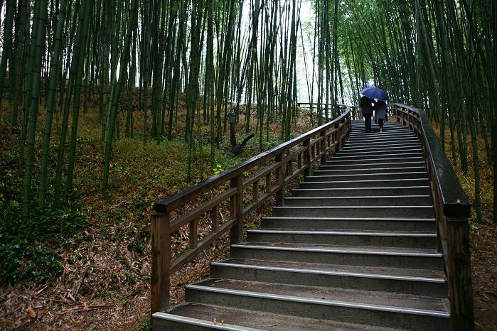담양 여행 1번지로 꼽히는 푸른 대나무 정원
