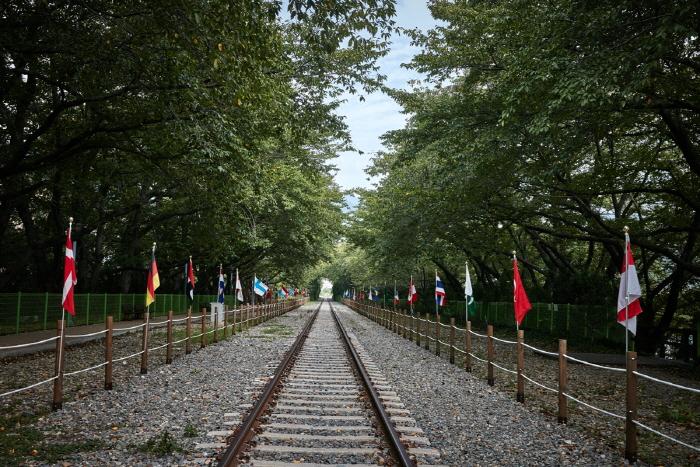Дорога вишнёвых деревьев на станции Кёнхва (경화역 벚꽃길)13
