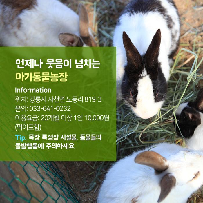 언제나 웃음이 넘치는 아기동물농장 Information 위치: 강릉시 사천면 노동리 819-3 문의: 033-641-0232 이용요금: 1인 8,000원(먹이 포함) Tip. 목장 특성상 시설물, 동물들의 돌발행동에 주의하세요