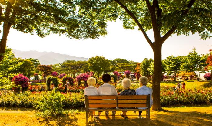 Seoul Grand Park Rose Festival (서울대공원 장미원축제)