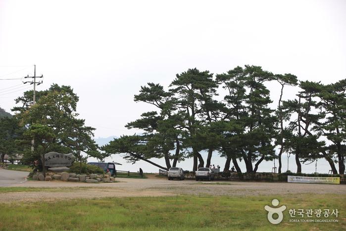 羅老宇宙海水浴場(나로우주해수욕장)