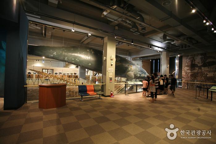 Jangsaengpo Whale Museum (장생포 고래박물관)