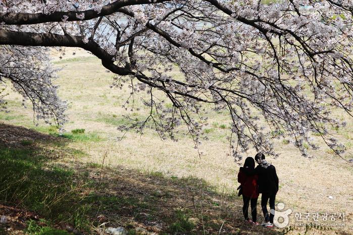 """경주 시내․보문호․불국사로 떠나는 벚꽃여행 """"봄바람 흩날리면, 함께 달려요!"""""""