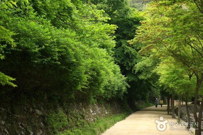 Gangcheonsan County Park (강천산군립공원)