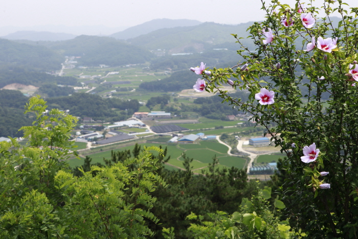 청원연꽃마을의 은적산 정상 전망
