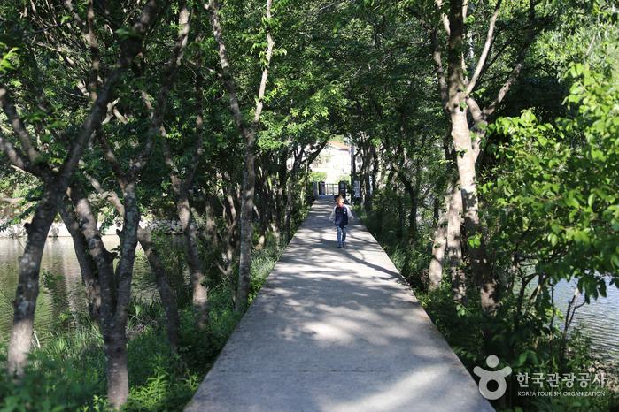 나무로 둘러싸인 아늑한 길을 따라 들어가면 환산정이 나온다
