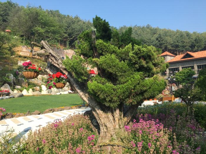 아름다운정원 화수목 사진7
