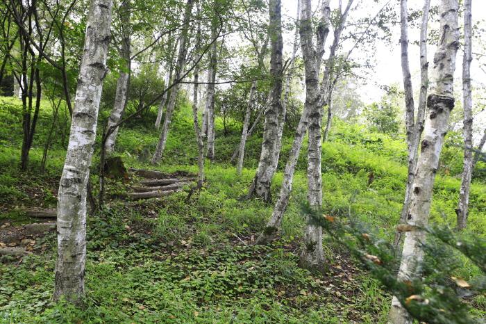 아름다운 자작나무 정원, 미술관자작나무숲 3