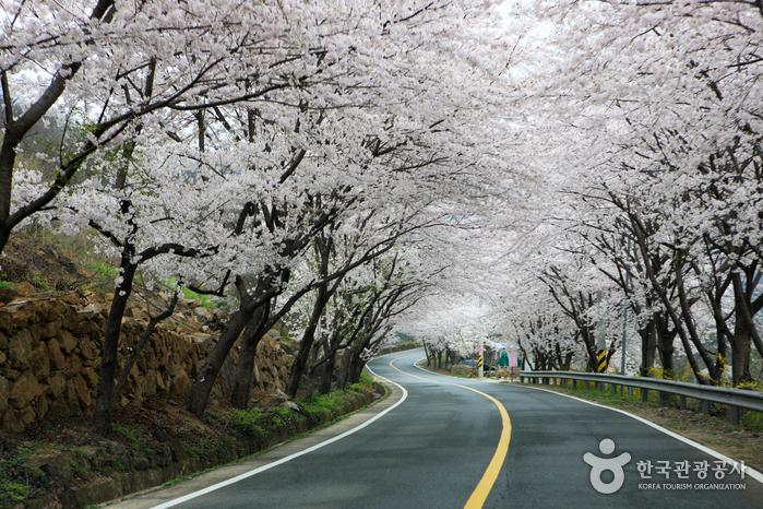 Simni (10-ri) Cherry Blossom Road (십리벚꽃길)