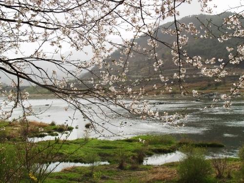 섬진강변 벚꽃축제 2019