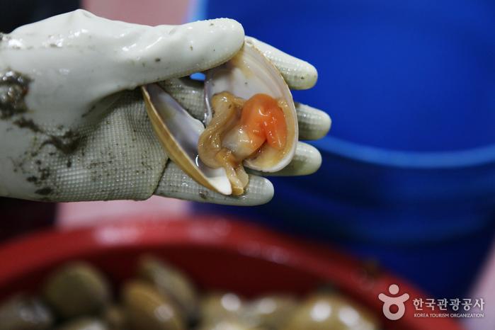 갈매기 부리를 닮은 갈미조개