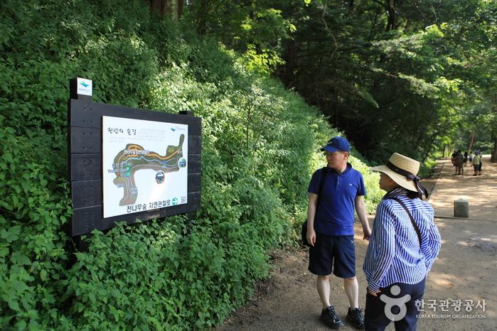 전나무숲 구간을 알려주는 안내판