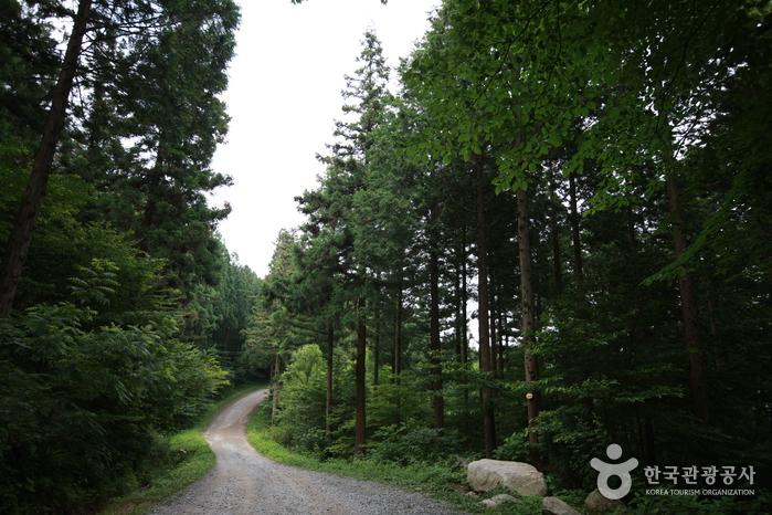 장성 축령산 편백숲 (장성 치유의 숲)